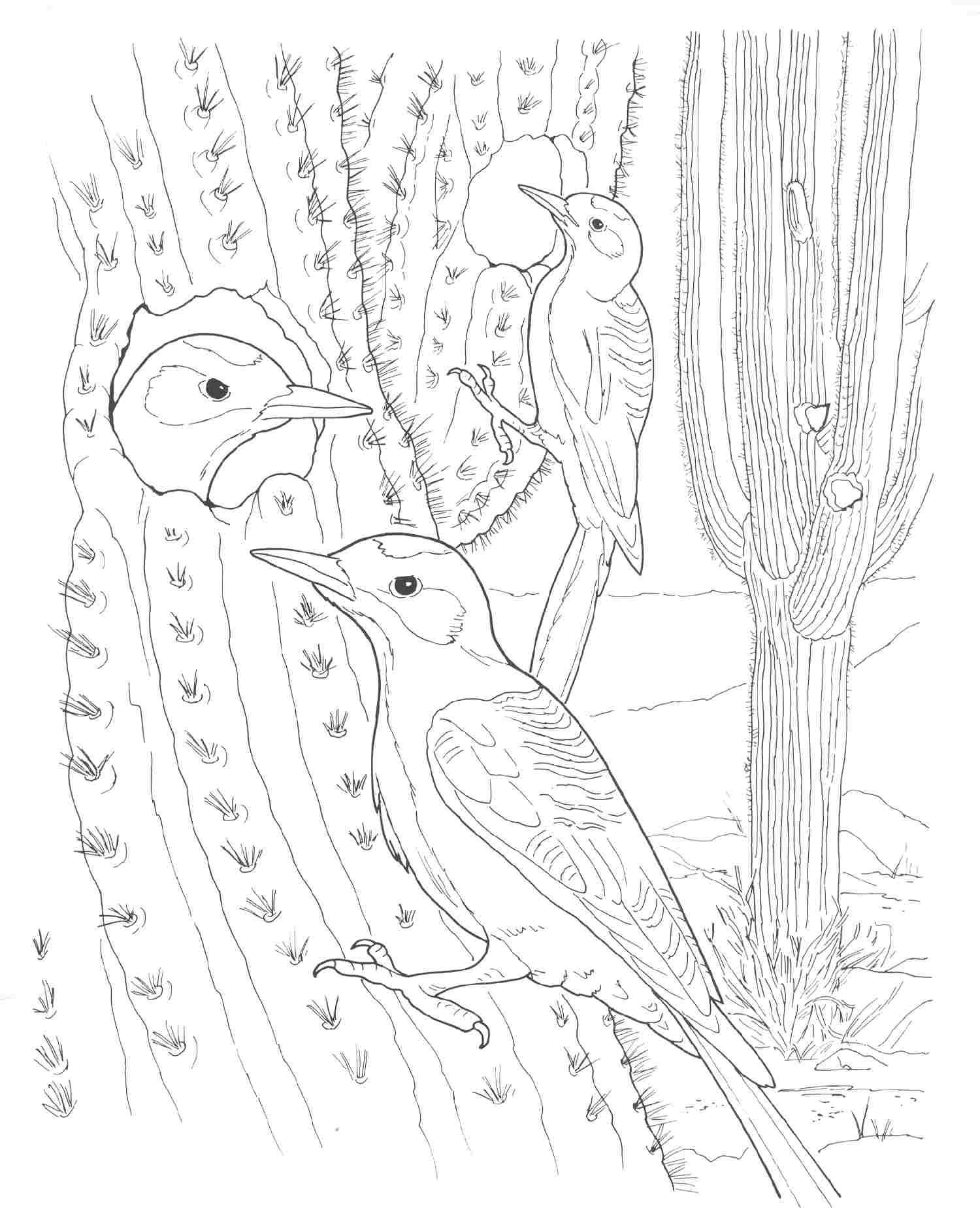 animal habitat coloring pages animal habitats printables related